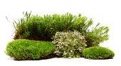 istock moss 184952456