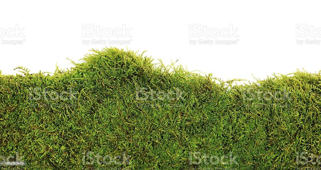moss stock photo