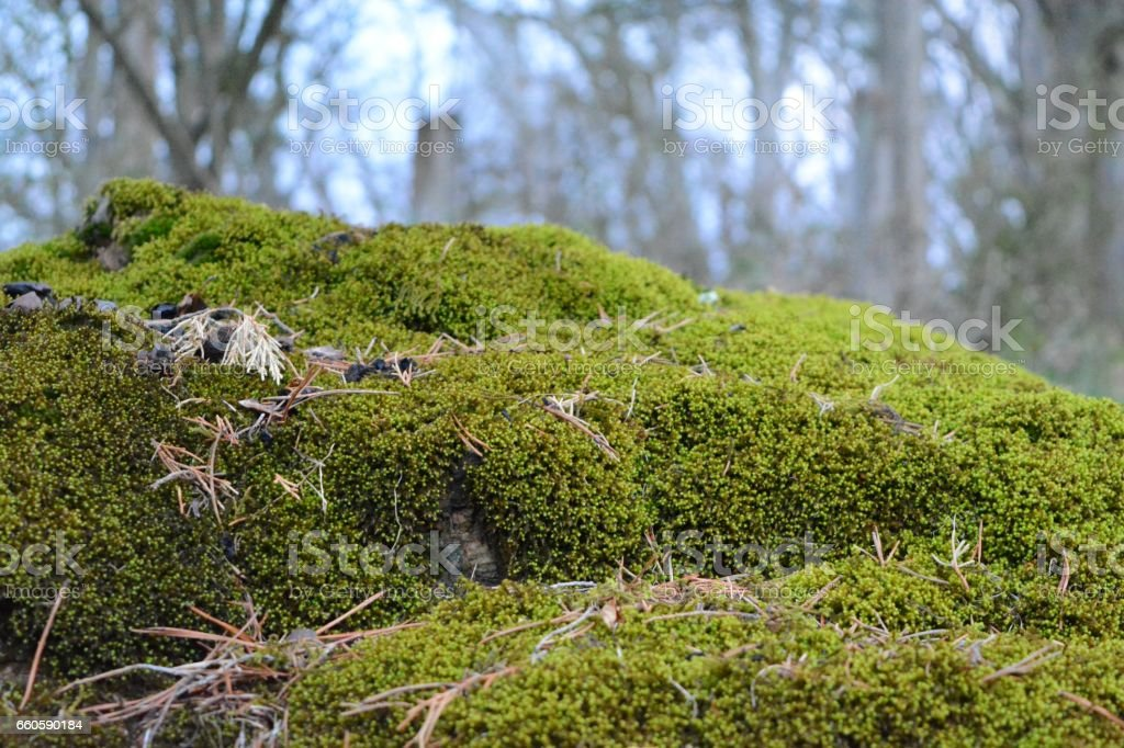 Moss royalty-free stock photo