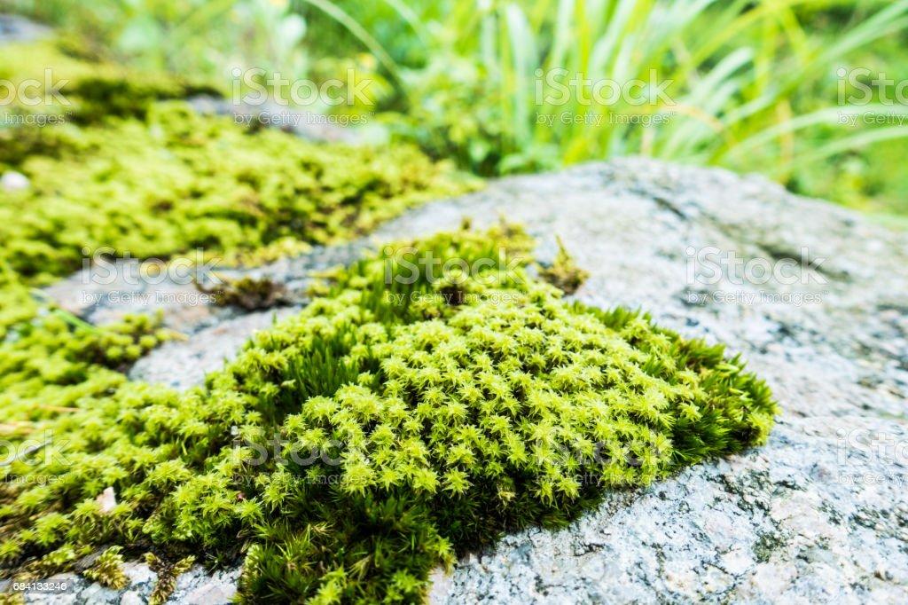 Moss royaltyfri bildbanksbilder