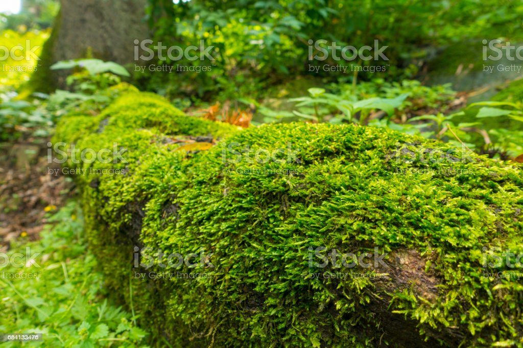 Moss foto stock royalty-free