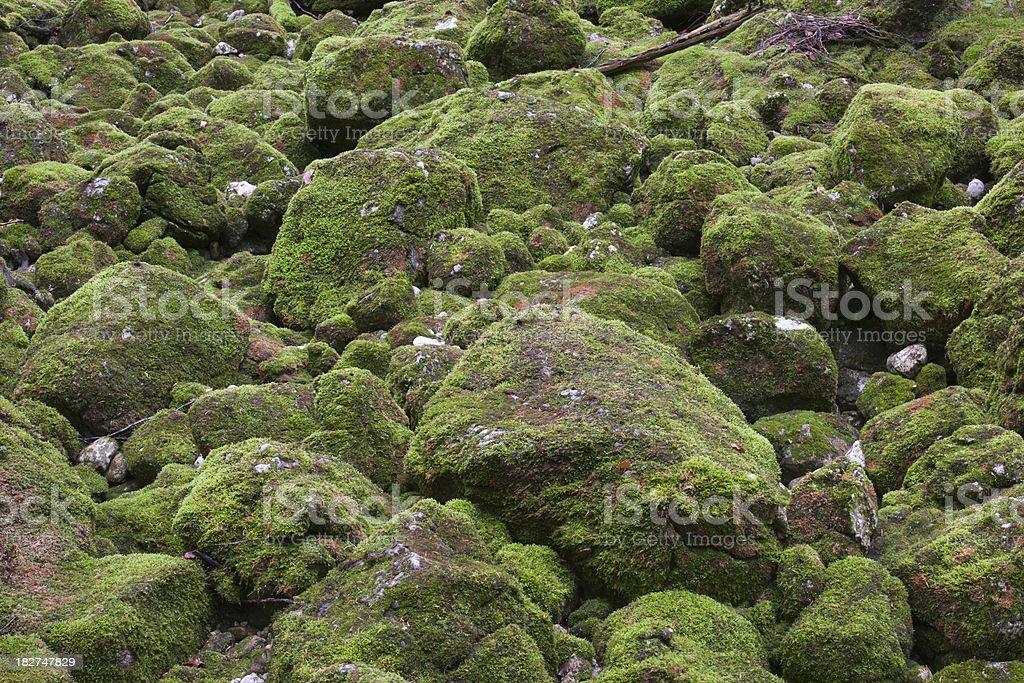 Moss Rocks Hintergrund (XXXL – Foto