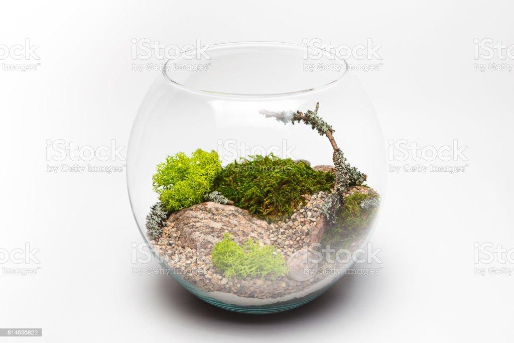 Moss terrarium in a round glass vase