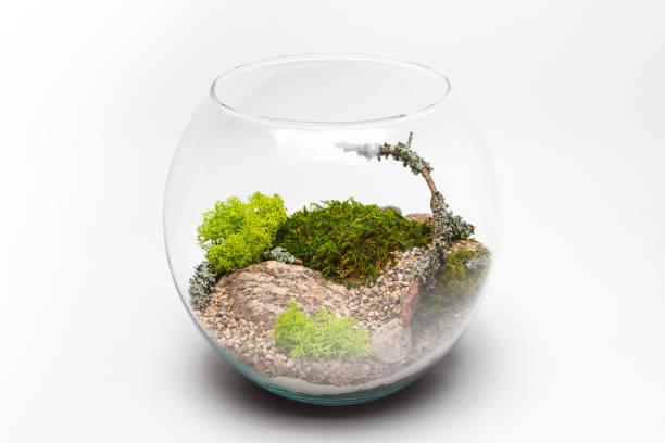 terrarium moos in einer runde glasvase - indoor feen gärten stock-fotos und bilder