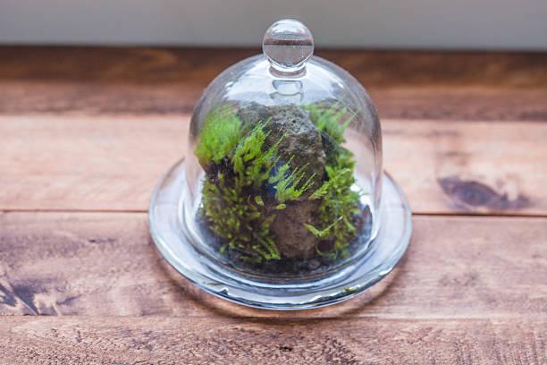 moss terrarium - terrarienpflanzen stock-fotos und bilder