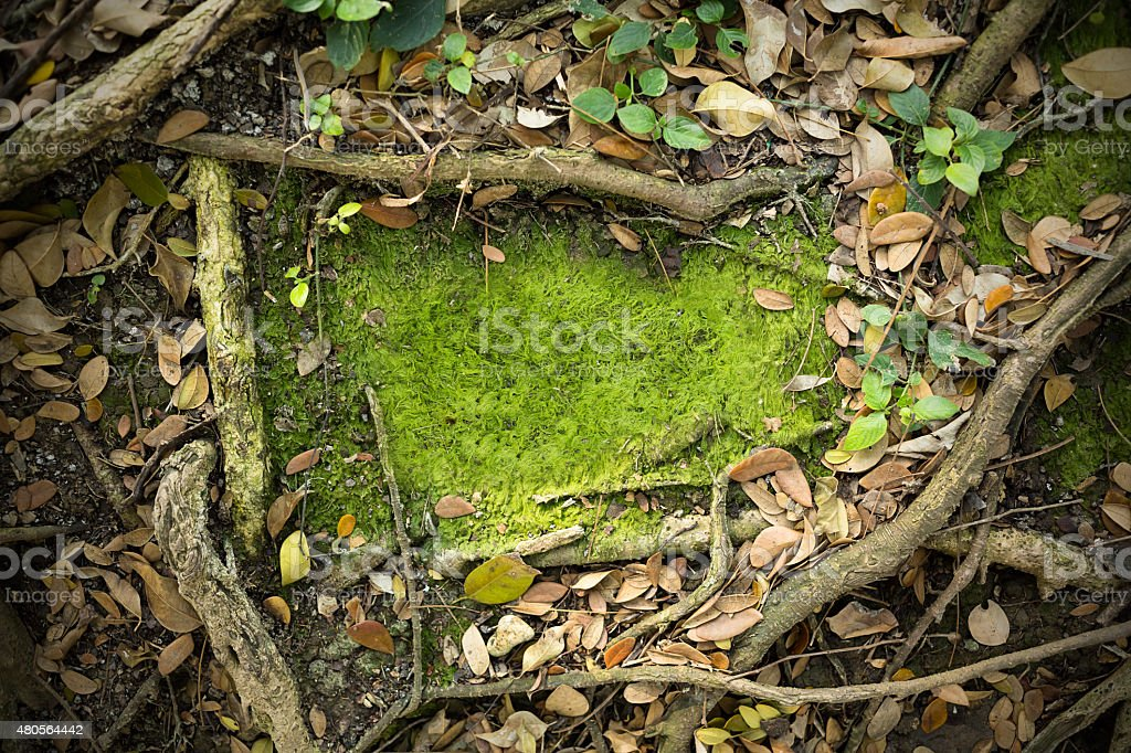 Moss Texture Background stock photo