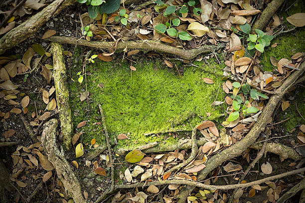 moss texture background - wood stone bildbanksfoton och bilder