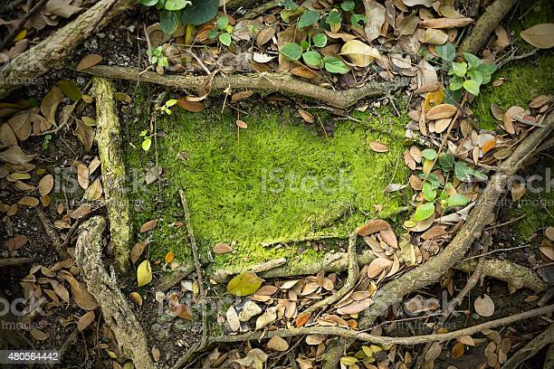 Photo of Moss Texture Background
