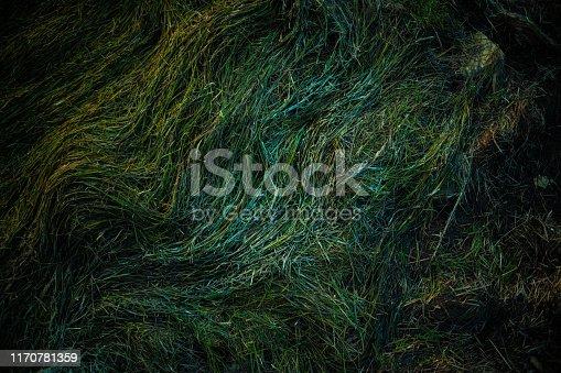istock Moss texture green 1170781359