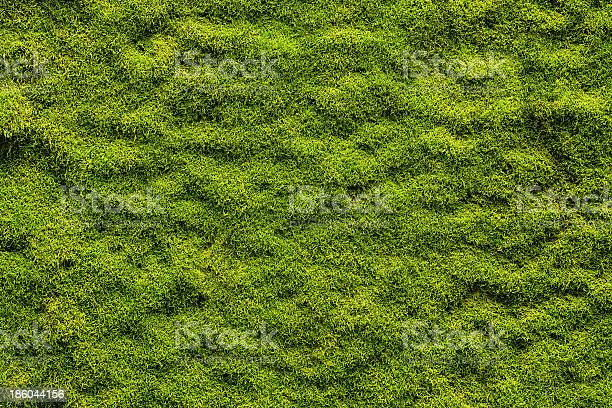 Moss Texture Stock Photo - Download Image Now