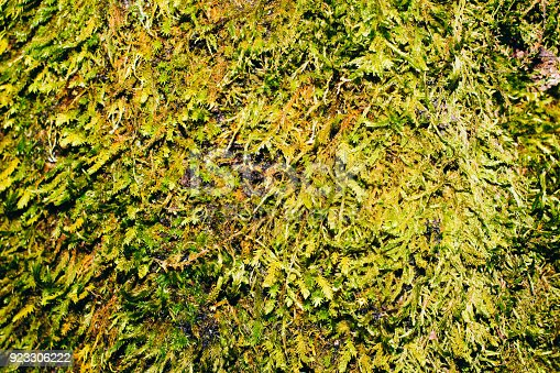 istock Moss Texture 923306222