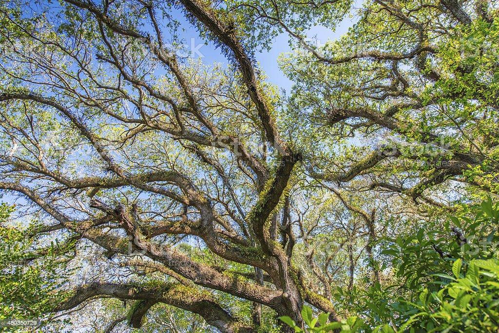 Moss Tree stock photo