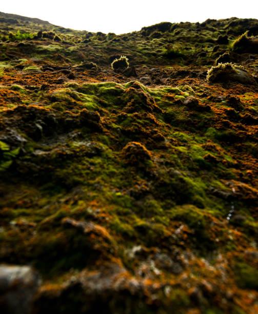 Moss Wall stock photo