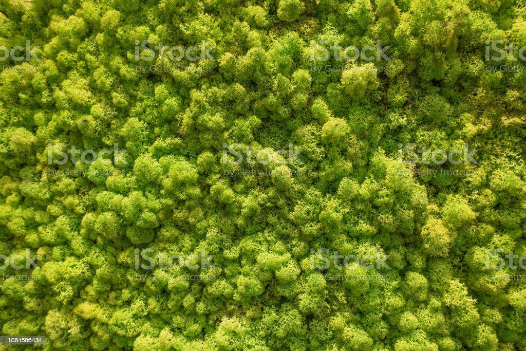 Moss wall. Vertical garden lush green wall pattern surface texture....