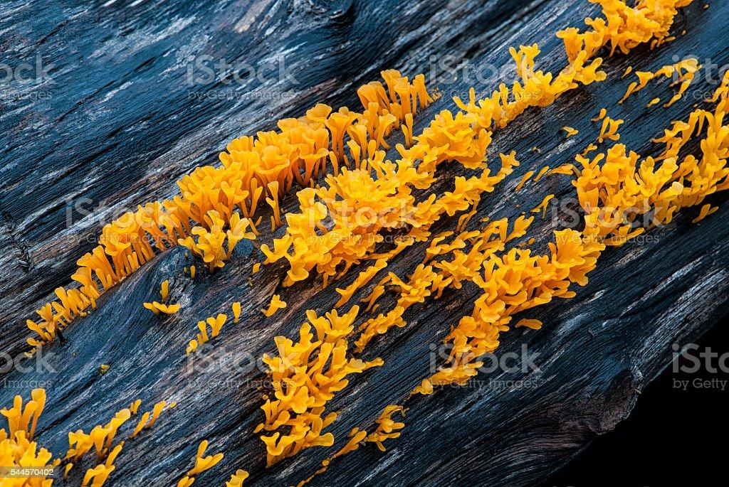 Moss Yellow,Thailand stock photo