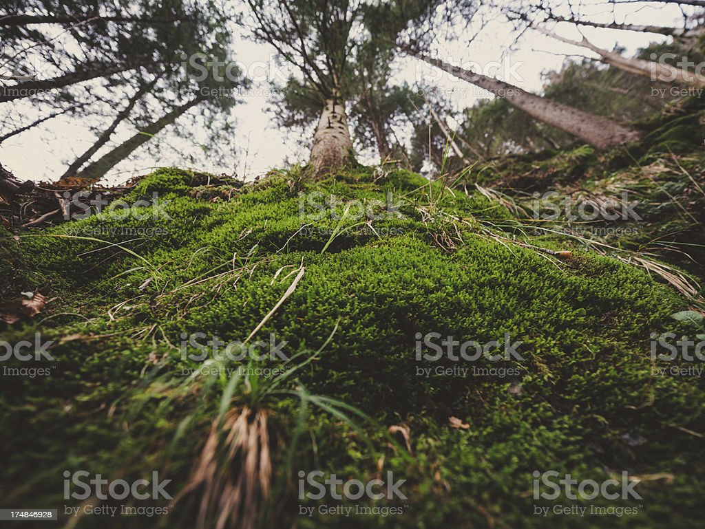 moss-covered forest stock photo