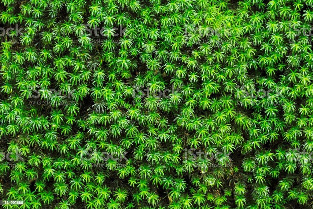 Mosses background stock photo