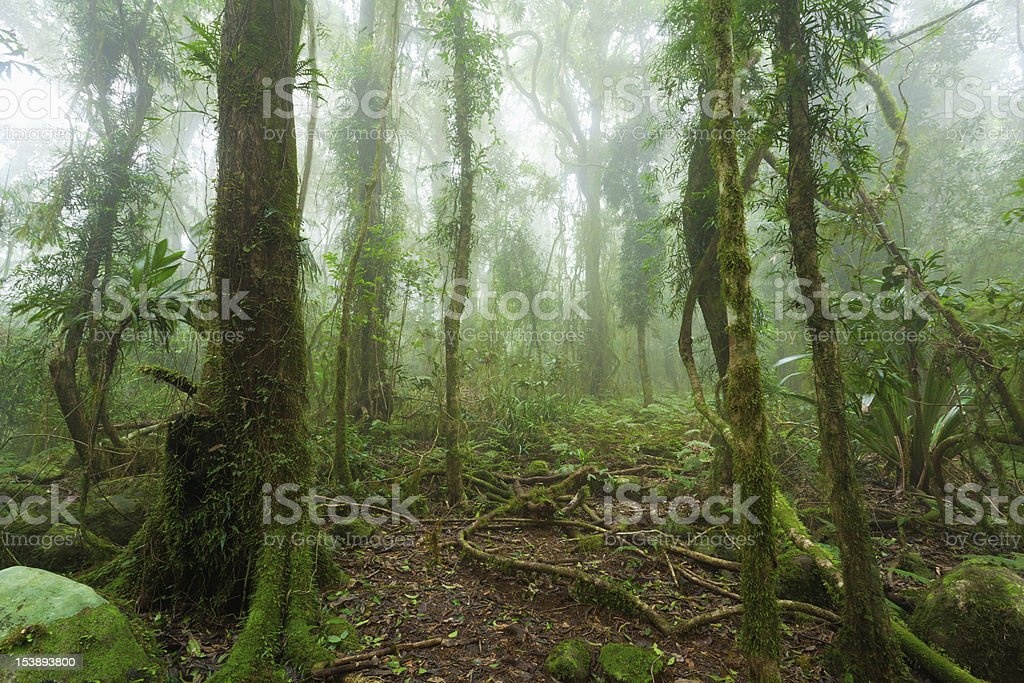 Mossy australian rainforest stock photo