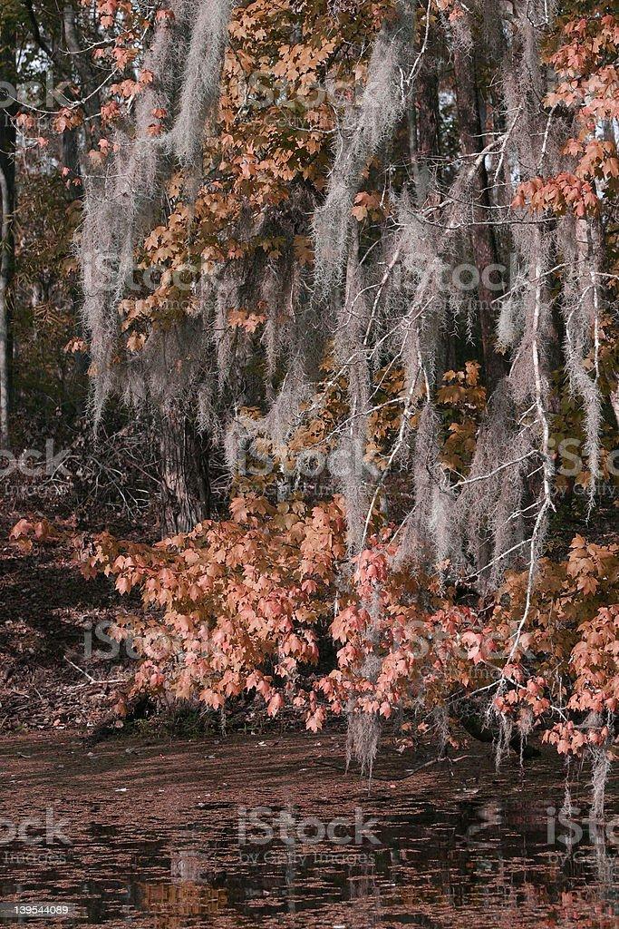 Mossy Autumn royalty-free stock photo