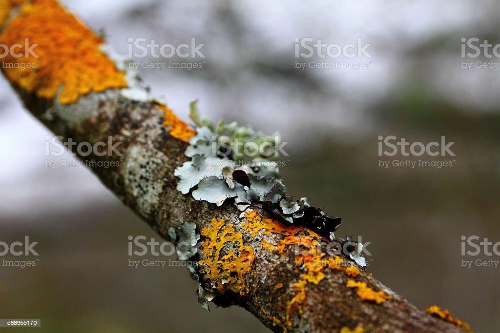mossy branch stock photo
