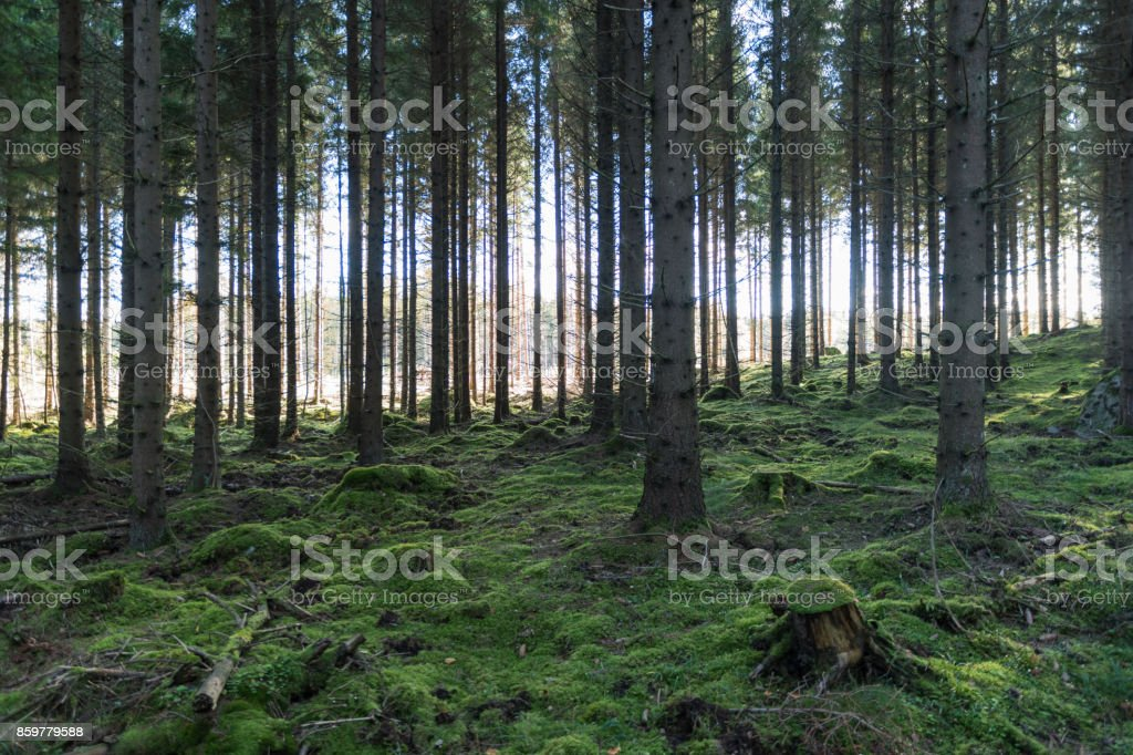 Mossy fairy forest stock photo