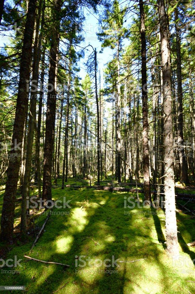 Mossy Forest Floor Irving Nature Park Saint John New Brunswick Canada