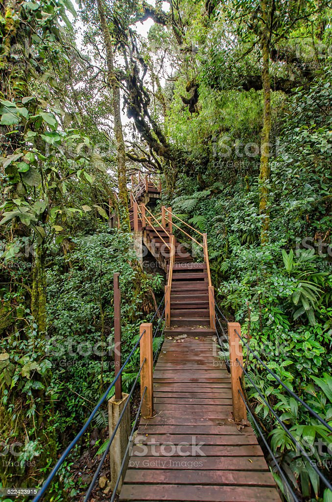 Mossy Forest of Gunung Brinchang,Cameron Highlands Malaysia stock photo