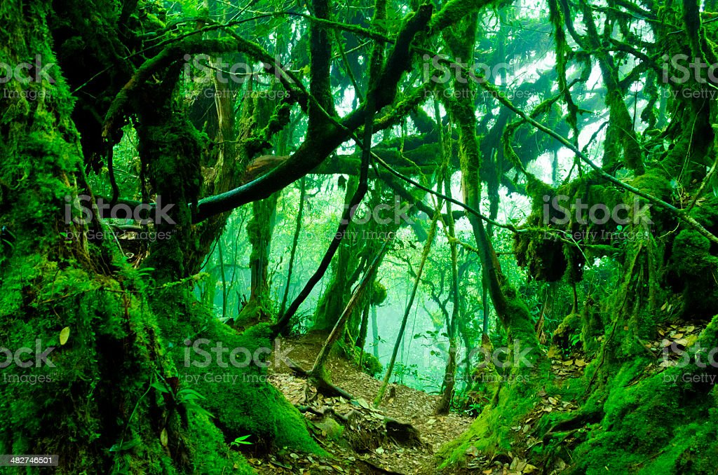 Mossy Forest royalty-free stock photo