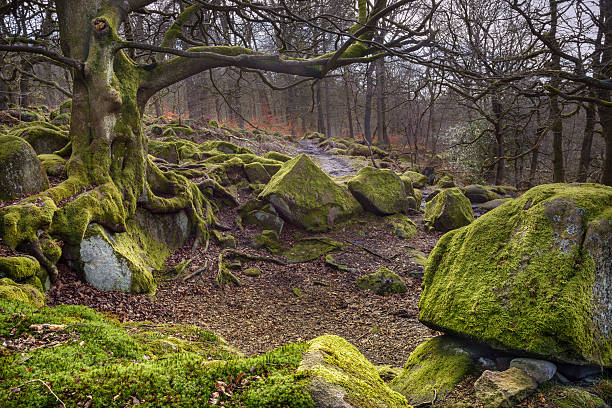 Mossy Glade stock photo