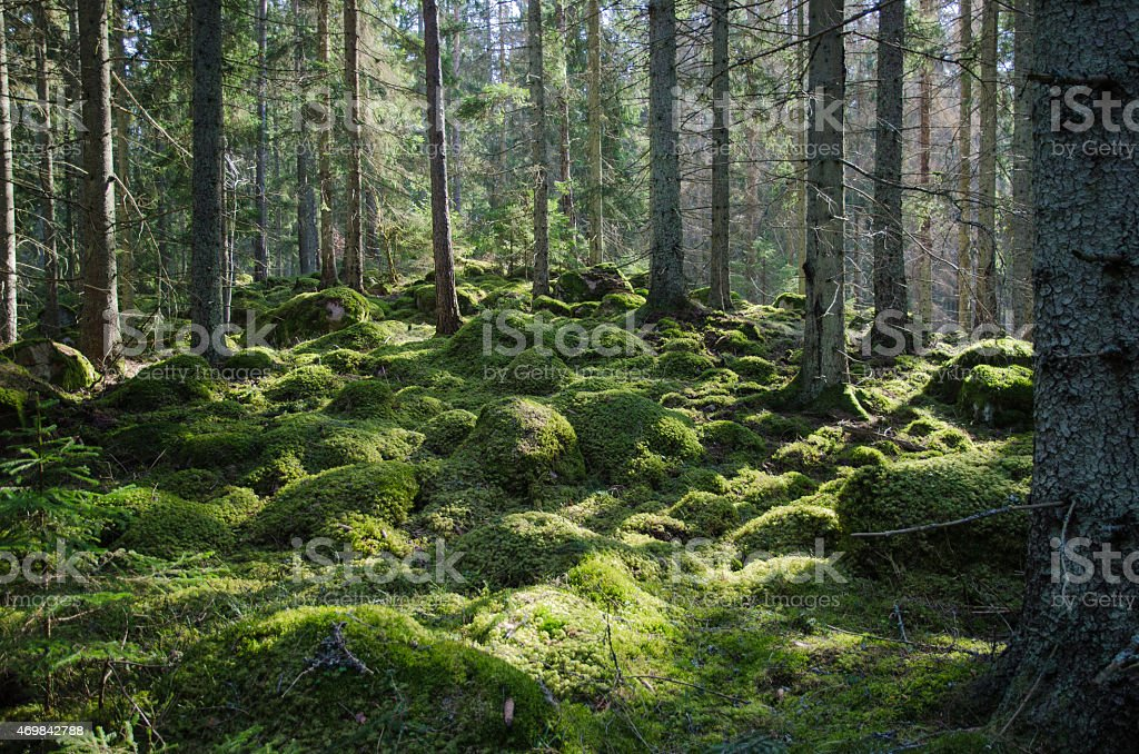 Mossy green forest stock photo