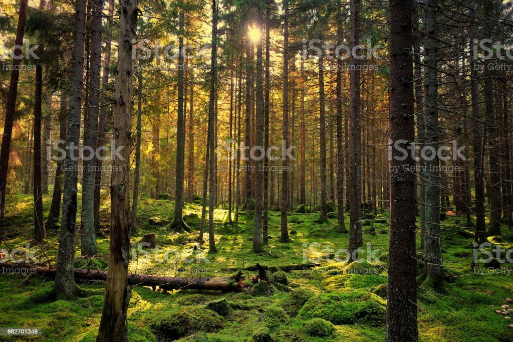 Mossy green forest foto stock royalty-free