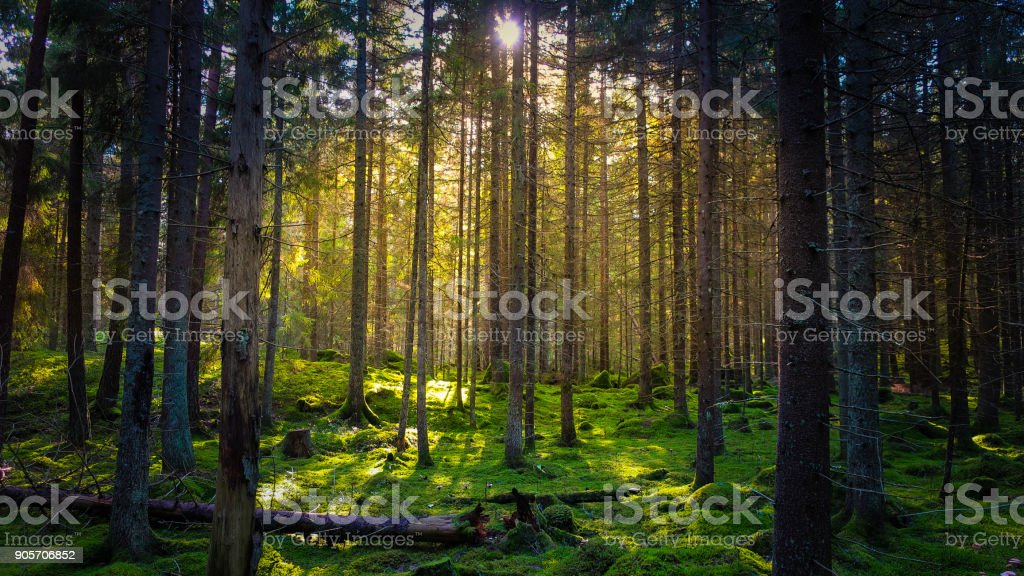 Mossig Grön skog - Royaltyfri Död - Fysisk beskrivning Bildbanksbilder