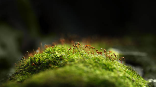 Mossy hillock in forest stock photo