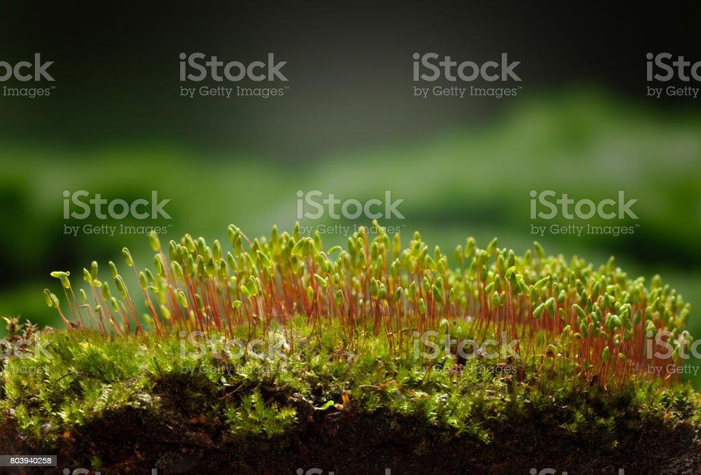 Mossy hillock stock photo