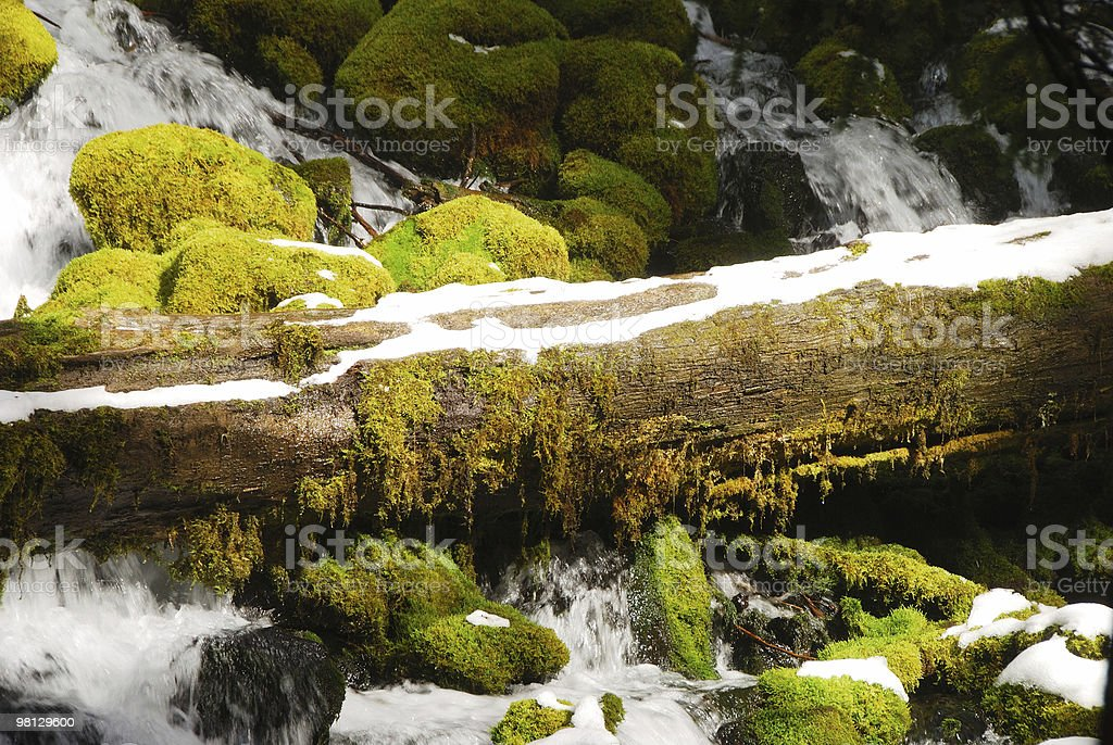 mossy log royalty-free stock photo