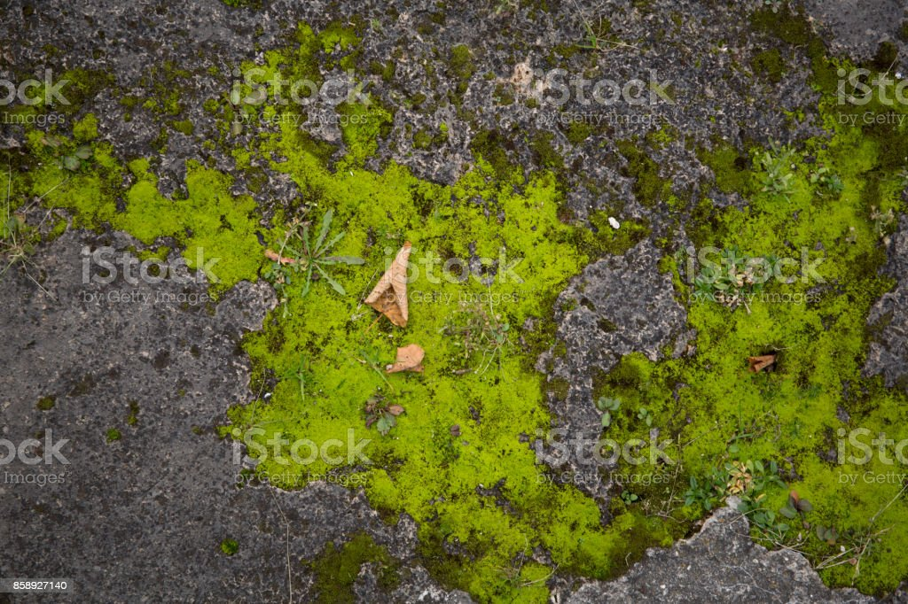 Mossy old rough stone surface texture stock photo