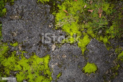 Mossy Old Rough Stone Surface Texture Stock Photo & More Pictures of Abstract