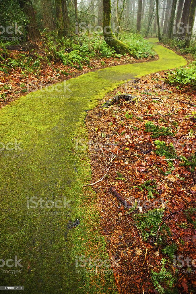 Mossy Path royalty-free stock photo