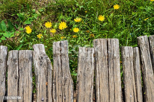 Parts of the wooden walkway leading through the National Park. Blooming, yellow flowers in the background. Plitvička Jezera, Croatia - June 25th 2019 - Official photography permission obtained by the Plitvice Lakes National Park and available on request.