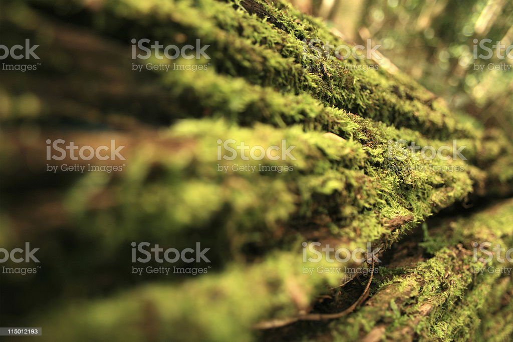 Mossy Rainforest Log royalty-free stock photo