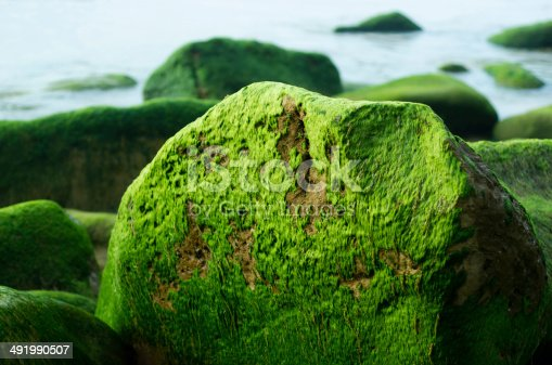 Some rocks with moss in northern Spain