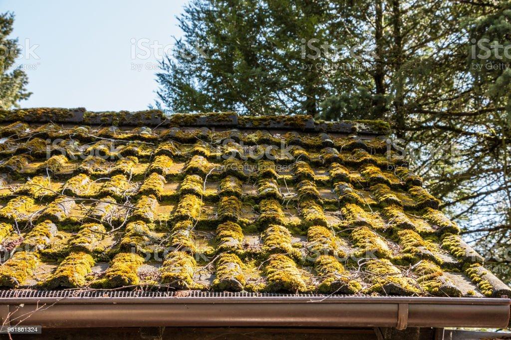 Bemoostes Dach einer Hütte im Garten – Foto