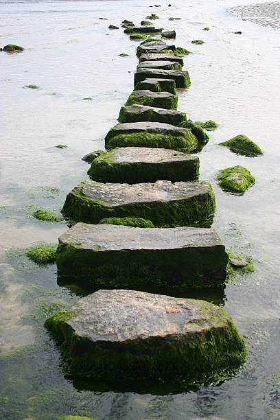 mossy stepping stones - walkway and bridge stock photos and pictures