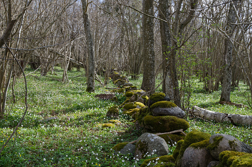 Mossy stone wall at spring