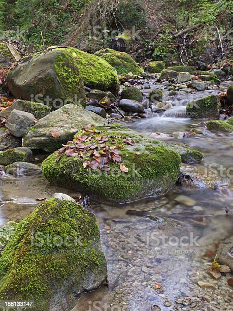Photo of Mossy stones and flowing water