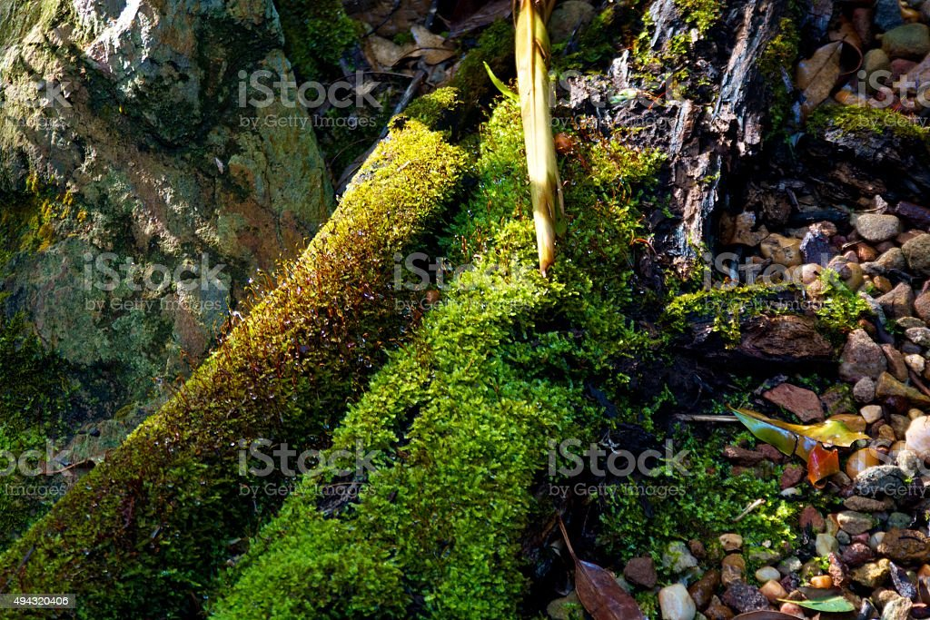 Mossy Stream Bank stock photo