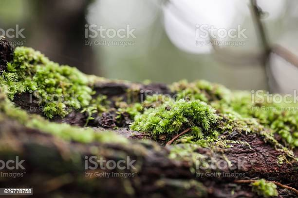 Photo of mossy tree trunk in the forest, selective focus