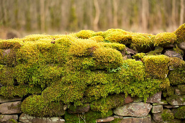 Mossy Wall. stock photo