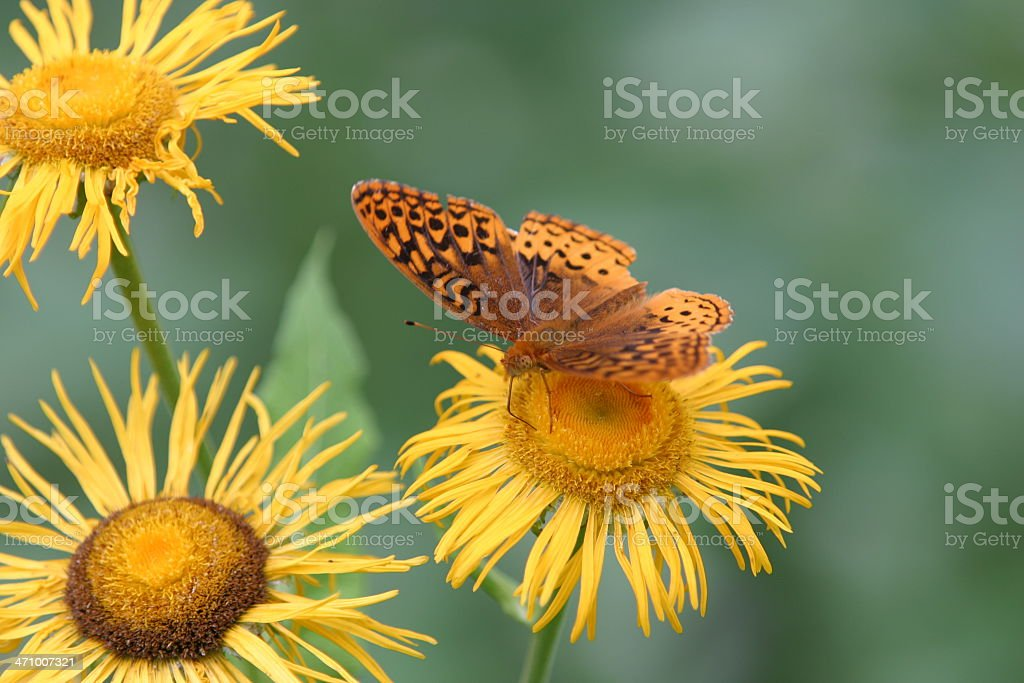 moth and flower royalty-free stock photo