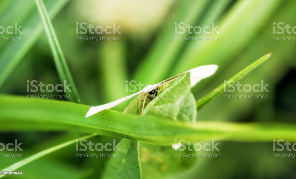 Moth camouflaged in greens photo libre de droits